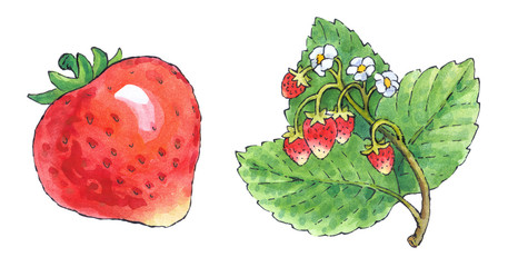 Watercolor painting of a set of fruit: strawberries