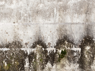 concrete wall with mold