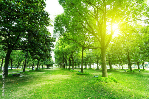 Foto Spatwand Bomen footpath and trees in park