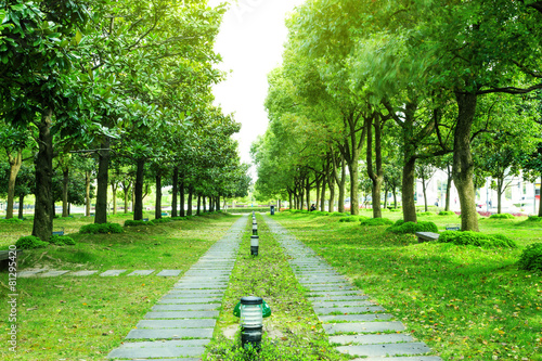footpath and trees in park - 81295420