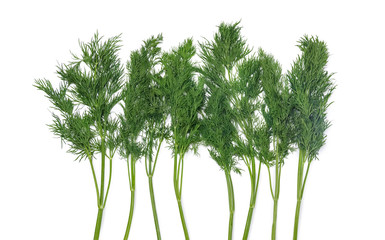 Branches of dill