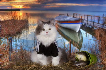 cat fishes in a pond at sunset