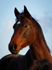 Pferdekopf vor blauem Himmel 2