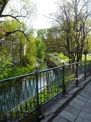 Drzewa nad rzeką w parku