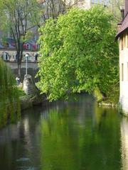 Odbicie drzewa w rzece