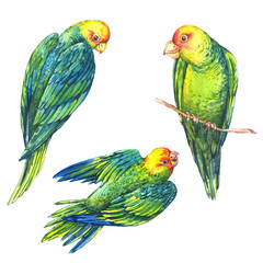 Watercolor Green Parrot on White Background