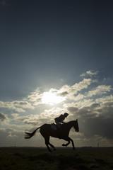 Equus ferus caballus - Horse galloping with rider
