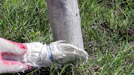 whitewashing trees