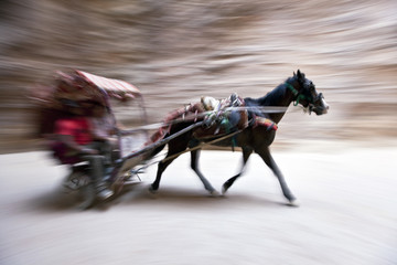 donkey cart on speed