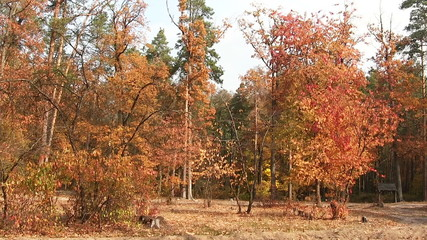 Beautiful autumn  trees with red leaves.  PAL