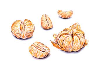 Ripe watercolor peeled tangerines. Set for design.