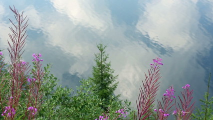 Clouds reflections in lake water and plans in front.