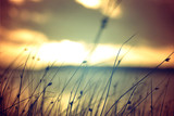 Wild grass at summer sunset vintage colors background