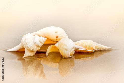 Sea shell at beach
