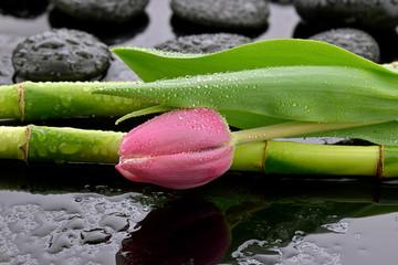 Mokry tulipan z bambusem i kamieniami do spa