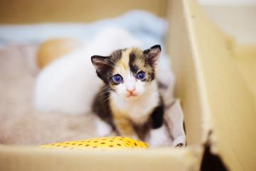 baby cat three color