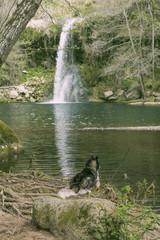 Dog on a cascade pond