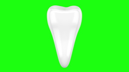 3d human tooth loop rotate on green chromakey background