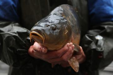 Live carp selling in Prague, Czech Republic.