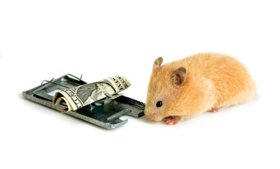 free money is only in a mousetrap
