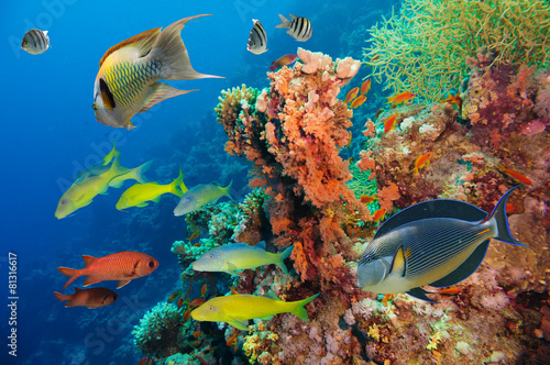 Colorful underwater reef with coral and sponges - 81316617