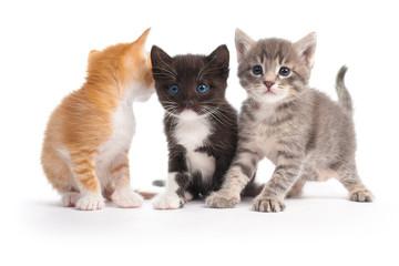 three kittens