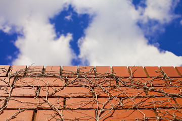 Blue skies over brick wall