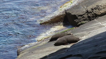 Close-up view of two seals on a rocky shore
