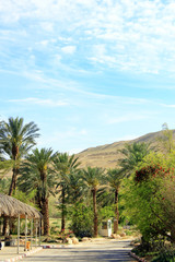 Green palm trees on red hills background