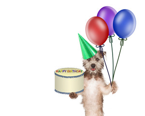 Dog Delivering Birthday Cake and Balloons