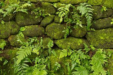 Muro de piedras con hiedra y plantas.