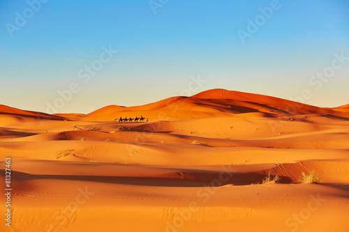 fototapeta na ścianę Camel Caravan w Sahary