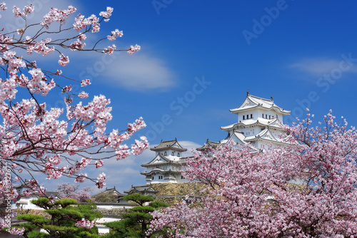 Himeji Castle with spring cherry blossoms, Japan - 81327677