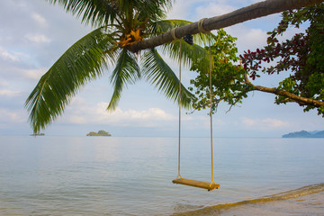 Swing hang from coconut tree