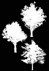 three isolated large white trees silhouettes