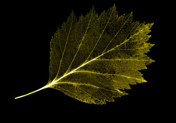 gold leaf skeleton isolated on black