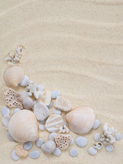 Seashells, snails and corals on the sand
