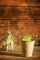 Potted seedlings growing in peat moss pot and house