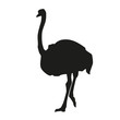 Isolated ostrich. Vector silhouette