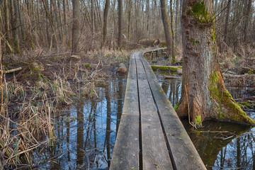 Wooden planks through the bog HDR