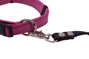 Part of the dog collar and leash.