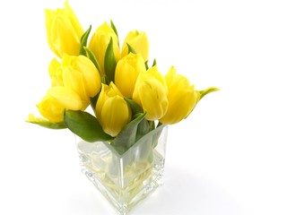 yellow spring tulips on a vase of glass over white