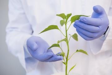 Scientist examining plants