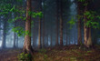 Leinwandbild Motiv dark forest