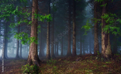Aluminium Bossen dark forest