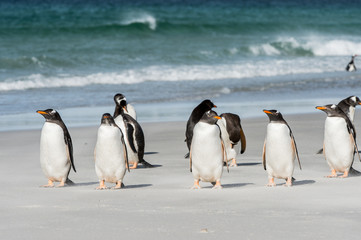 Group of the penguins near the Atlantic Ocean