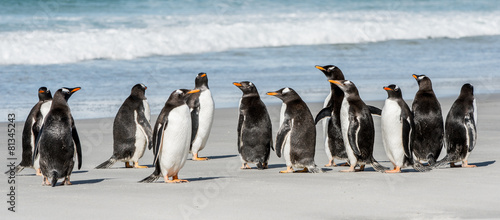 Plexiglas Antarctica Group of the penguins near the Atlantic Ocean