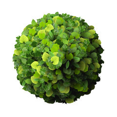 Ball, ring made from green leaves.
