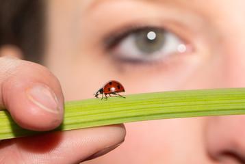 Ladybird on Green Flower Stalk With Eye In Background