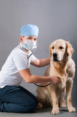 student spends auscultation dog